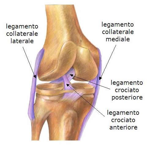 legamento-crociato-anteriore