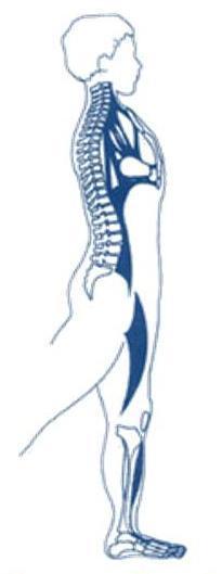 ginnastica-posturale roma 2